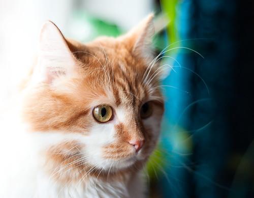 [フリー画像] 動物, 哺乳類, ネコ科, 猫・ネコ, 201101251100