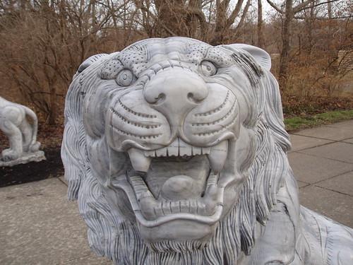 lion, Nashville TN