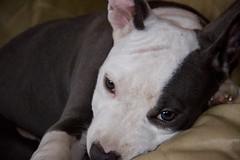 IMG_1026 (www.inezitamarchesano.com.br) Tags: raica
