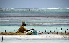 Zanzibar ... l'isola che c' ... (Augusta Onida) Tags: zanzibar pwani spiaggia beach tanzania africa donna woman mare sea patrimoniounesco paesaggio landscape acqua water lavoro job alga seaweed raccoglitrice picker