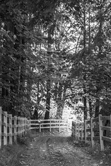 Country Lane - May Valley BW (Don Thoreby) Tags: mayvalley mayvalleywashingtonstate horsefarms farms barns mayvalleyhighway squakmountain autumn fall backroads countrylanes ranch horseranch ranchfence fenceline
