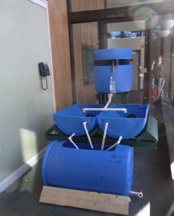 Lynn aquaponics system