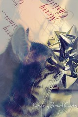 Twinkle Twinkle Little Star!! (KrazyBoutCats) Tags: christmas cats pets animals kittens felines christmaskittens