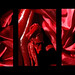 Blood Red Flower Triptych