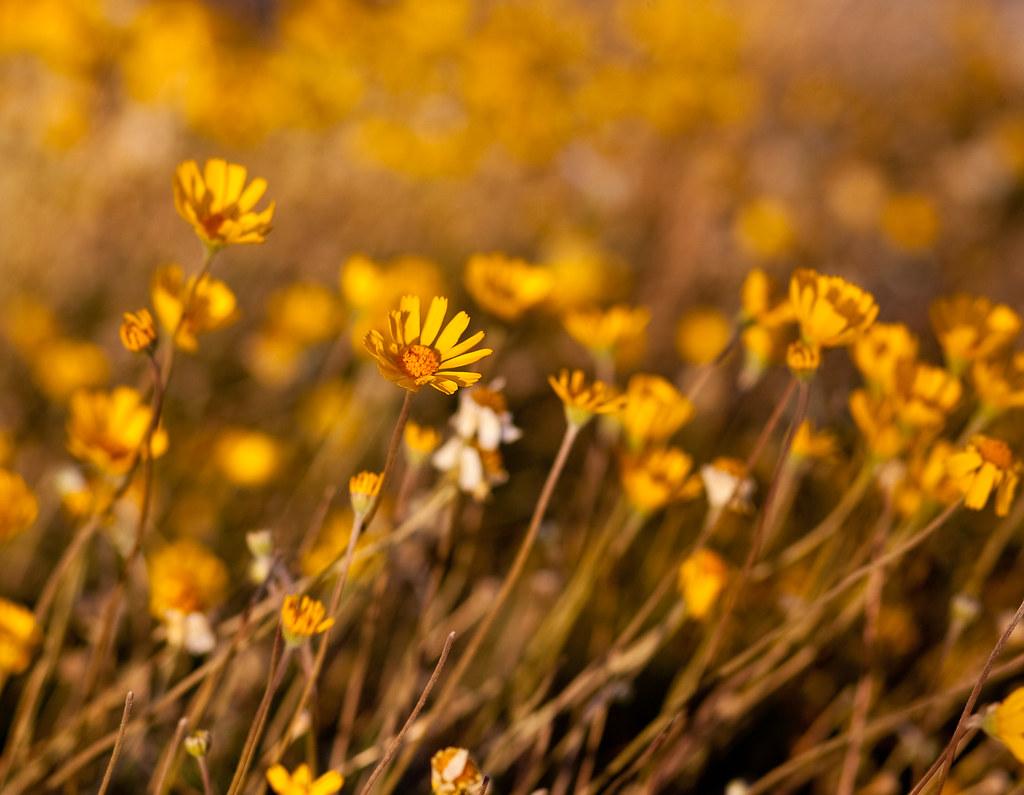 IMAGE: http://farm6.static.flickr.com/5245/5238907924_3f1f724dd1_b.jpg