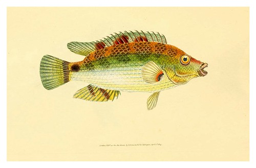 011-The natural history of British fishes 1802-Edward Donovan