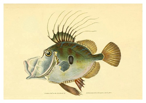 004-The natural history of British fishes 1802-Edward Donovan