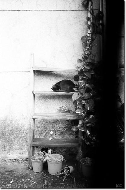 a silent corner (侯硐,貓)