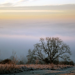 Lone Tree, Cotswolds (Andrew Lockie) Tags: winter sunset england mist tree fog rural frost dusk broadway cotswolds lone escarpment
