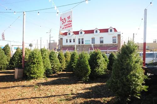Chauvet Tree Farms