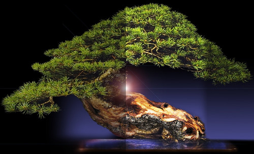 """Bonsai052 • <a style=""""font-size:0.8em;"""" href=""""http://www.flickr.com/photos/30735181@N00/5261942440/"""" target=""""_blank"""">View on Flickr</a>"""