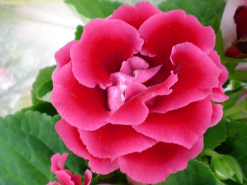 Cameron flora 2