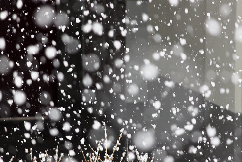 Schneeflöckli