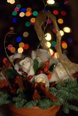 christmasbokeh (MikeDeRose) Tags: christmas winter roses rose 35mm nikon bokeh indiana whiterose nikkor35mm d7000 35mmf18g nikond7000