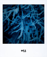 "#DailyPolaroid #93 • <a style=""font-size:0.8em;"" href=""http://www.flickr.com/photos/47939785@N05/5273958397/"" target=""_blank"">View on Flickr</a>"