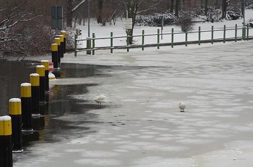Berlin Tiergarten Landwehrkanal