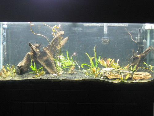 Fish Tank- Fixed!