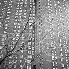 (Georg Sedlmeir) Tags: nyc windows usa tree film analog manhattan bowery rodinal tmax400 rolleicord rolleicordvb