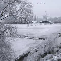 Hard to find colors in Dutch winter (Bn) Tags: winter snow holland mill monument netherlands geese topf50 wilhelminabrug goose wintertime topf100 sawmill deventer ijssel winterwonderland wieken craftsmanship dutchwindmill windmolen greenenergy molenaar anatidae typicaldutch stellingmolen whitexmas 100faves 50faves sawingwood rijksmonument provincieoverijssel houtzaagmolen meesterwerk dutchculture zaagmolen whiteholland bestofnetherlands berfort bolwerkmolen bestofholland awhitechristmas bouwjaar1863 hetzagenvanhout windmillexperience themillindeventer houthandelaars molenaandeijssel destichtingbolwerksmolen hardtofindcolorsindutchwinter bolwerksweg6