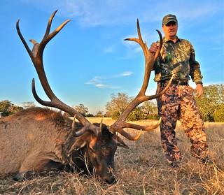 Elk 410