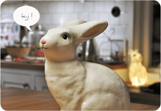 kaniner i köket