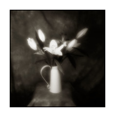 Flowers pinhole zone plate (Monosnaps) Tags: christmas city flowers ireland our urban bw dublin film studio poster lens postcard flash plate f65 pinhole special posters friendly rodinal f8 dub zone dubs everyones acros 75mm monosnaps eddiemallin irishpinholeimages