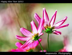Happy New Year 2011 / สวัสดีปีใหม่ 2554