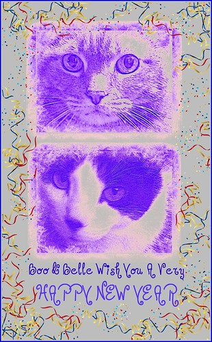 Cats New Year card