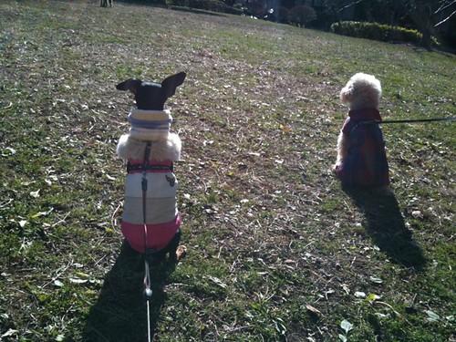 そしてヒノキちゃんが立ち去るのを見送る黒犬とトイプーちゃん。