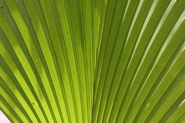 palm (detail)