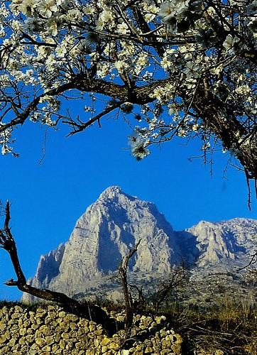Nuestra montaña rodeada de almendros
