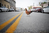 To get to the other side. (andertho) Tags: california road street chicken lines delete10 delete9 delete5 delete2 delete6 delete7 delete8 delete3 delete delete4 save save2 save4 mission fowl sfist sanjuanbautista deletedbydeletemeuncensored