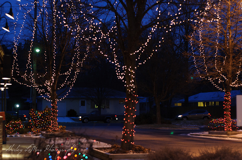 Christmas Lights in January