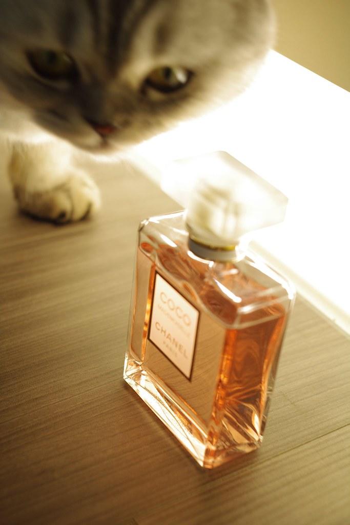 一種酒釀般的色澤,一種品味;是香水?還是美酒?~CZJ & COCO