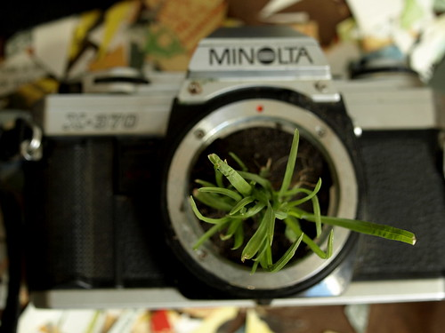 Project Restyle - Broken Camera Grass Planter