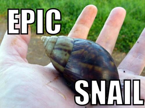 epic_snail2