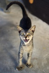 Critter # 27 (obo-bobolina) Tags: cat critter may kitty malaysia 365 cherating 2011 project365