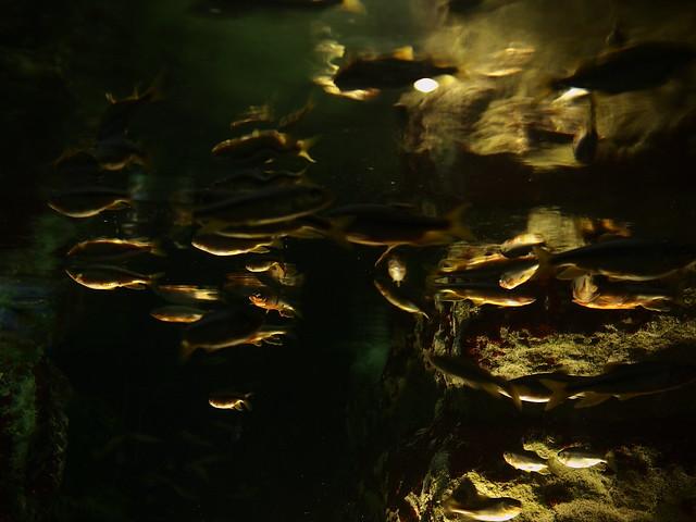 Toba Aquarium