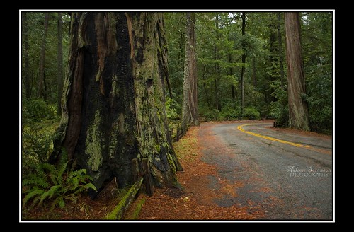 16/365: Deep into the Avenue of the Giants