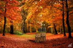 Knee Deep in Love... (2k Photography) Tags: autumn trees orange cute fall love nature beauty leaves leaf kiss girlfriend couple dof wind sweet bokeh gorgeous valentine blow yello 2k danbo ~2|{~ pushpdeeppandey