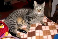 Charlie (Kurt Faler) Tags: friends rescue cat kitten kitty center felines ffrc friendsoffelinesrescuecenter kwfffrcsss01