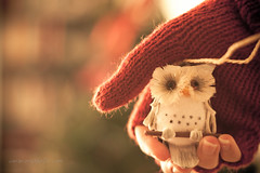 here ya go, mamaowl! (tumbleweed.in.eden) Tags: christmas canon 50mm holidays decoration ornaments owl 500d t1i