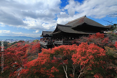Kiyomizudera Temple, Kyoto (yameme) Tags: travel japan canon eos maple kyoto  kansai     1635mmlii 5dmarkii