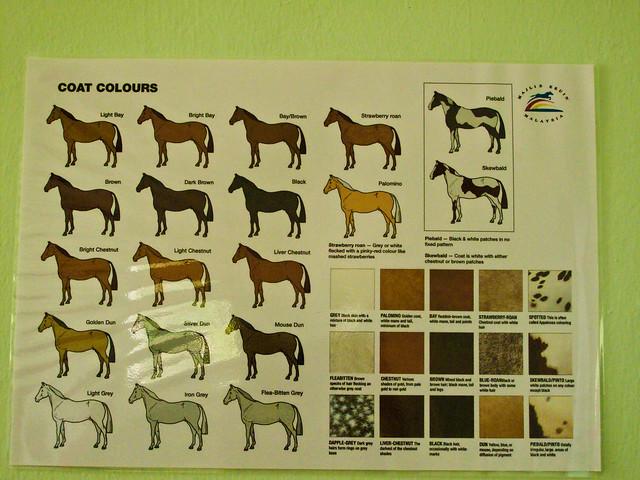 IMG_0104 Horse Breed Poster ,Perak Turf Club