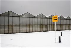 Westerhonk (leo.roos) Tags: winter snow netherlands sign monster minolta sneeuw westland greenhouses kassen verkeersbord zuidholland a900 darosa westerhonk minolta173535 leoroos