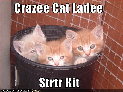 funny-pictures-crazy-cat-lady-starter-kit