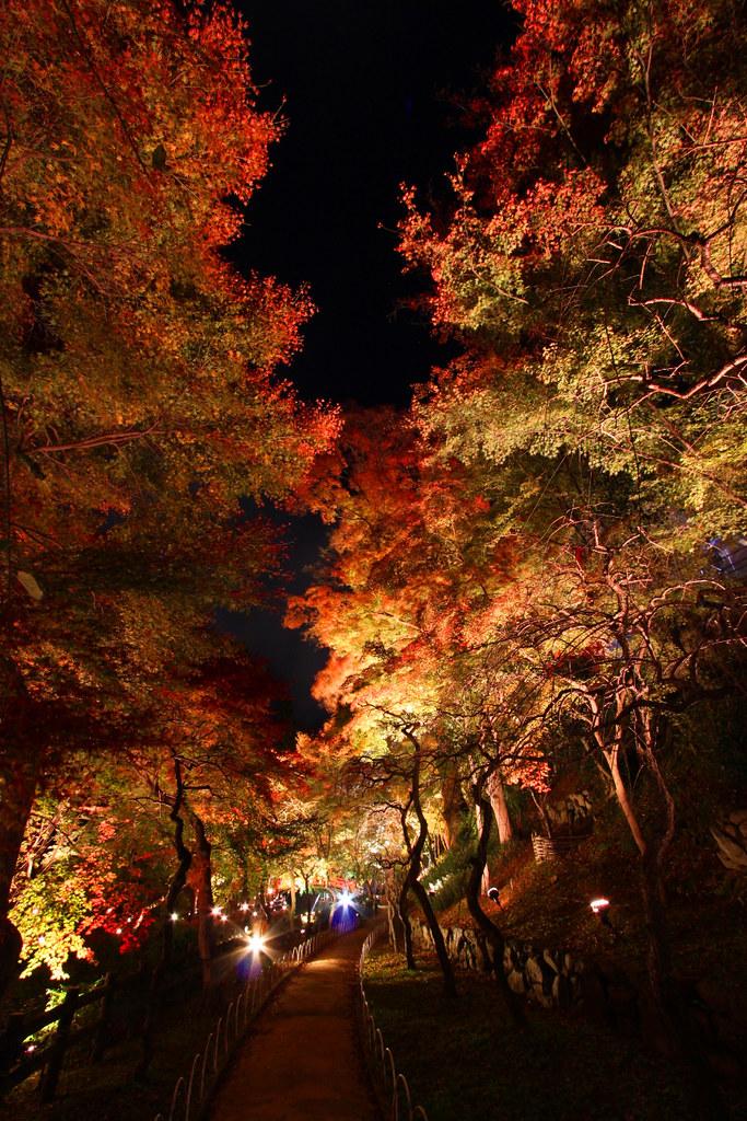 Kitanotenmangu Red Leaf Lightup 2010 (10)