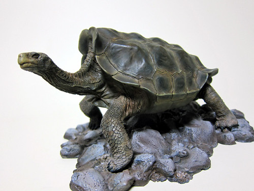 giant_tortoise_3