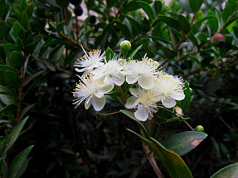 11-12-2010-flower3