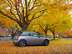 December Fall colors in San Jose (SpeednutDave) Tags: fallcolors sanjose minicooper crapcam yellowleaves r53 darksilvermini droidx